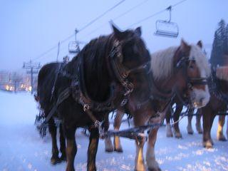Breck2010 118